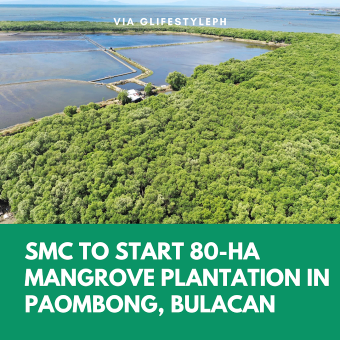 SMC to start 80-hectare mangrove plantation in Paombong, Bulacan