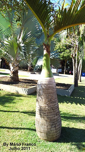 Palm bottle