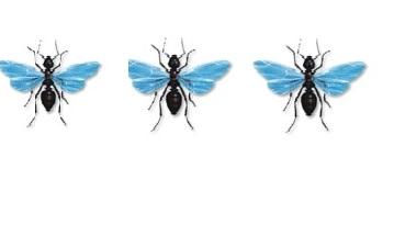 """"""""""",""""حشرة تشبه النمل"""" """""""",""""حشرة تشبه النمل تطير"""" """""""",""""حشرة تشبه النمل ولها أجنحة"""","""""""""""" """""""",""""حشرة تشبه النملة وتطير"""" """""""",""""حشرة تشبه النمل في جدها"""" """""""",""""حشرة تشبه النملة"""" """""""",""""حشرة تشبه النمل الابيض"""" """""""",""""حشره طائره تشبه النمل"""" """""""",""""حشره صغيره تشبه النمل"""" """""""",""""حشرة صغيرة جدا تشبه النمل"""" """""""",""""حشرة تشبه الهاموش"""" """""""",""""حشرة تشبه الصرصور"""" """""""",""""حشرة تشبه الناموس"""" """""""",""""حشرة صغيرة جدا تقرص"""" """""""",""""حشرة تشبه البرغوث"""" """""""",""""حشرة صغيرة جدا بيضاء تقرص"""" """""""",""""حشره تشبه العنكبوت وتطير"""" """""""",""""حشرة سوداء تطير تشبه النمل"""" """""""",""""حشرة بيضاء طائرة"""" """""""",""""حشرة تشبه الذباب في الحمام"""" """""""",""""حشرة تشبه الخنفساء تطير"""" """""""",""""حشرة صغيرة تقرص وتطير"""" """""""",""""الحشرات حرشفية الاجنحه"""" """""""",""""اسم حشرة الحمام"""" """""""",""""حشرة باربع اجنحة"""" """""""",""""حشرة تشبه النملة تطير"""","""""""","""""""","""""""","""""""","""""""","""""""","""""""" """""""",""""حشرة الاكلانة"""","""""""","""""""","""""""","""""""","""""""","""""""","""""""" """""""",""""حشرة كالخنفساء"""","""""""","""""""","""""""","""""""","""""""","""""""","""""""" """""""",""""حشرة الانارسيا"""","""""""","""""""","""""""","""""""","""""""","""""""","""""""" """""""",""""حشرة الكيرينا"""","""""""","""""""","""""""","""""""","""""""","""""""","""""""" """""""",""""حشرات اصغر من النمل"""","""""""","""""""","""""""","""""""","""""""","""""""","""""""" """""""",""""حشرة تشبه النملة في جدها"""","""""""","""""""","""""""","""""""","""""""","""""""","""""""" """""""",""""سبب وجود النمل والحشرات في المنزل"""","""""""","""""""","""""""","""""""","""""""","""""""","""""""" """""""",""""حشرة صغيرة لونها ابيض"""","""""""","""""""","""""""","""""""","""""""","""""""","""""""" """""""",""""حشرة النمل الابيض"""","""""""","""""""","""""""","""""""","""""""","""""""","""""""""""