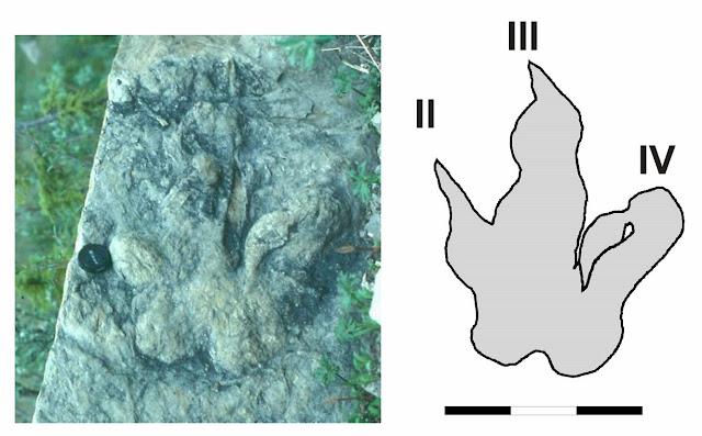 Dinosaur injuries interpreted through footprints