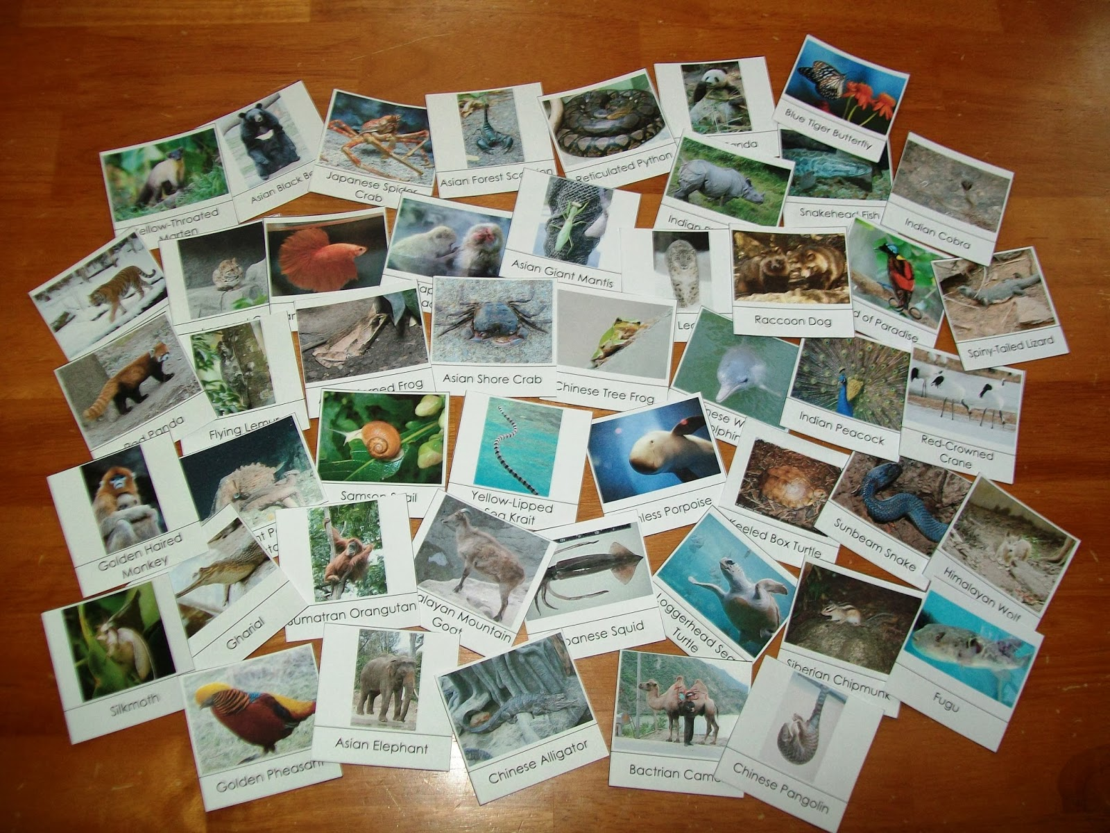 Free Animals of Asia Cards