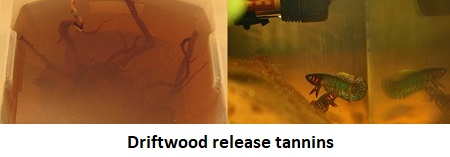 Driftwood release tannins