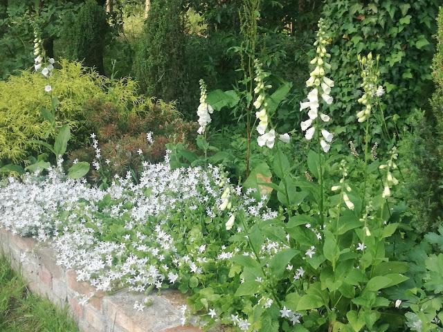 białe kwiaty w ogrodzie