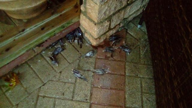 Δεκάδες νεκρά σπουργίτια στην Πέρδικα Θεσπρωτίας (+ΦΩΤΟ)