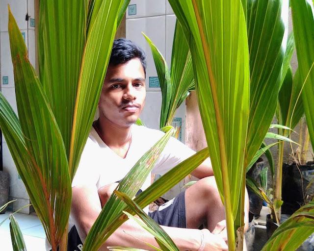 A good Potrait with Coconut plants
