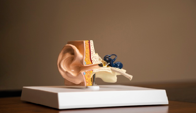 Anatomi sistem pendengaran