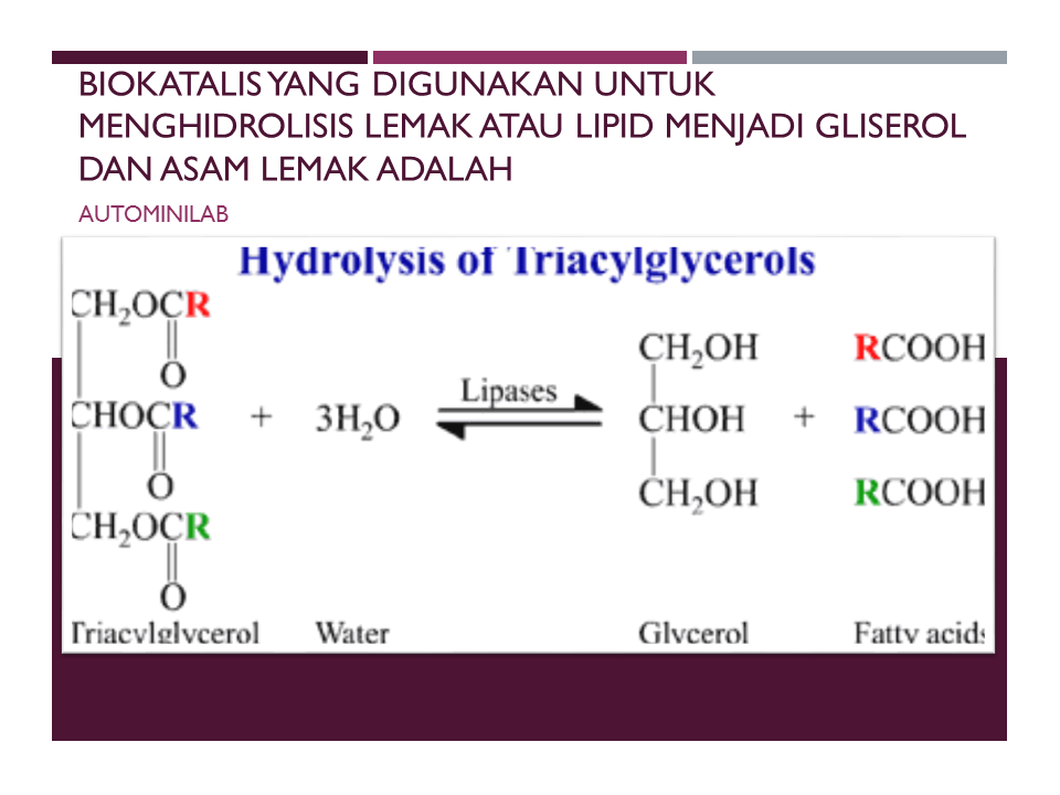 biokatalis yang digunakan untuk menghidrolisis lemak atau lipid menjadi gliserol dan asam lemak adalah Lipase