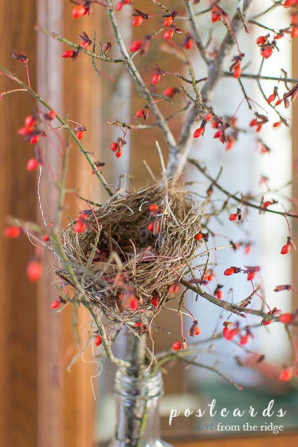 small bird nest in branch with red berries