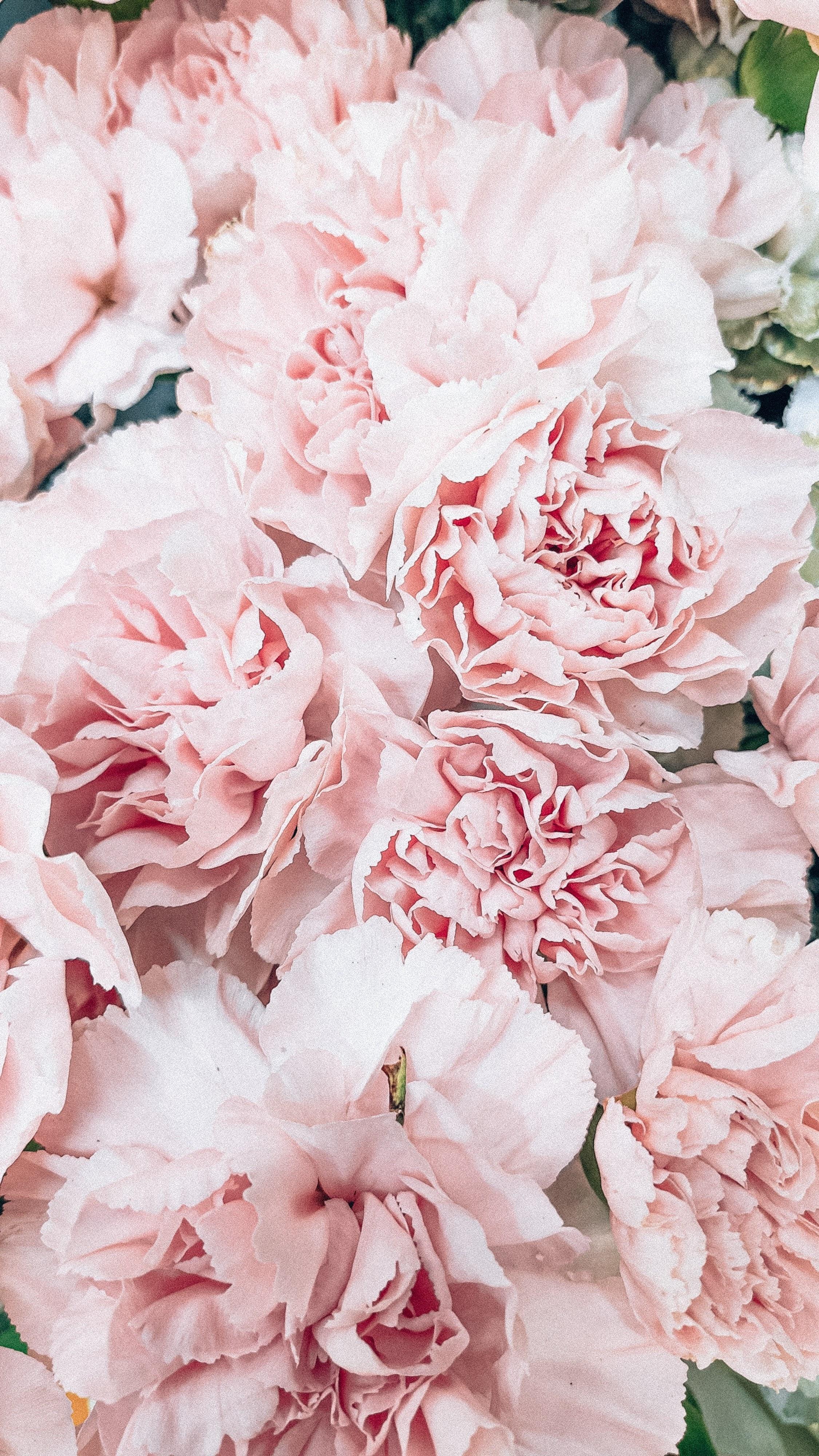 Pink Flower in Macro Lens | Photo by Rikonavt via Unsplash