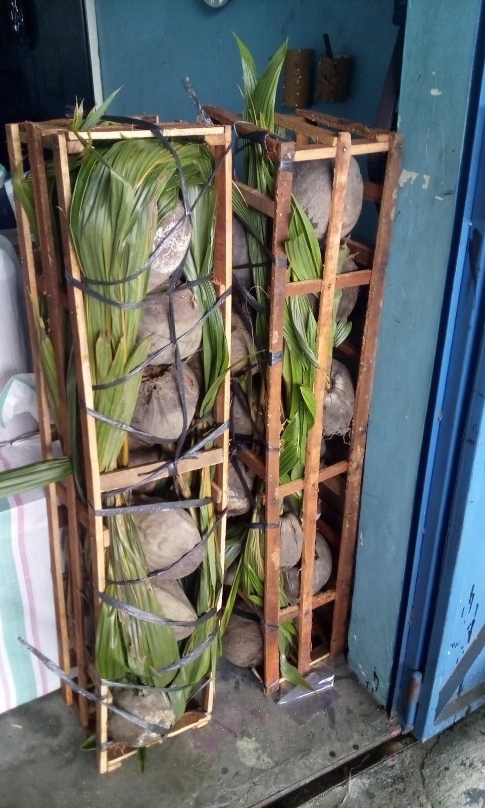 Bibit tanaman unggul - Bibit kelapa wulung disebut juga pohon sejuta manfaat, Buah kelapa hijau wulung dapat diambil manfaatnya dari sari air kelapa muda, daging buah, tempurung dan sabutnya. Salah satu produk yang dihasilkan dari kelapa hijau adalah sari kelapa (kelapa muda hijau). Produk dari daging kelapa yang sudah tua adalah daging kelapa parut, kulit ari daging kelapa dan minyak kelapa hijau