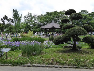 城北菖蒲園のアヤメ