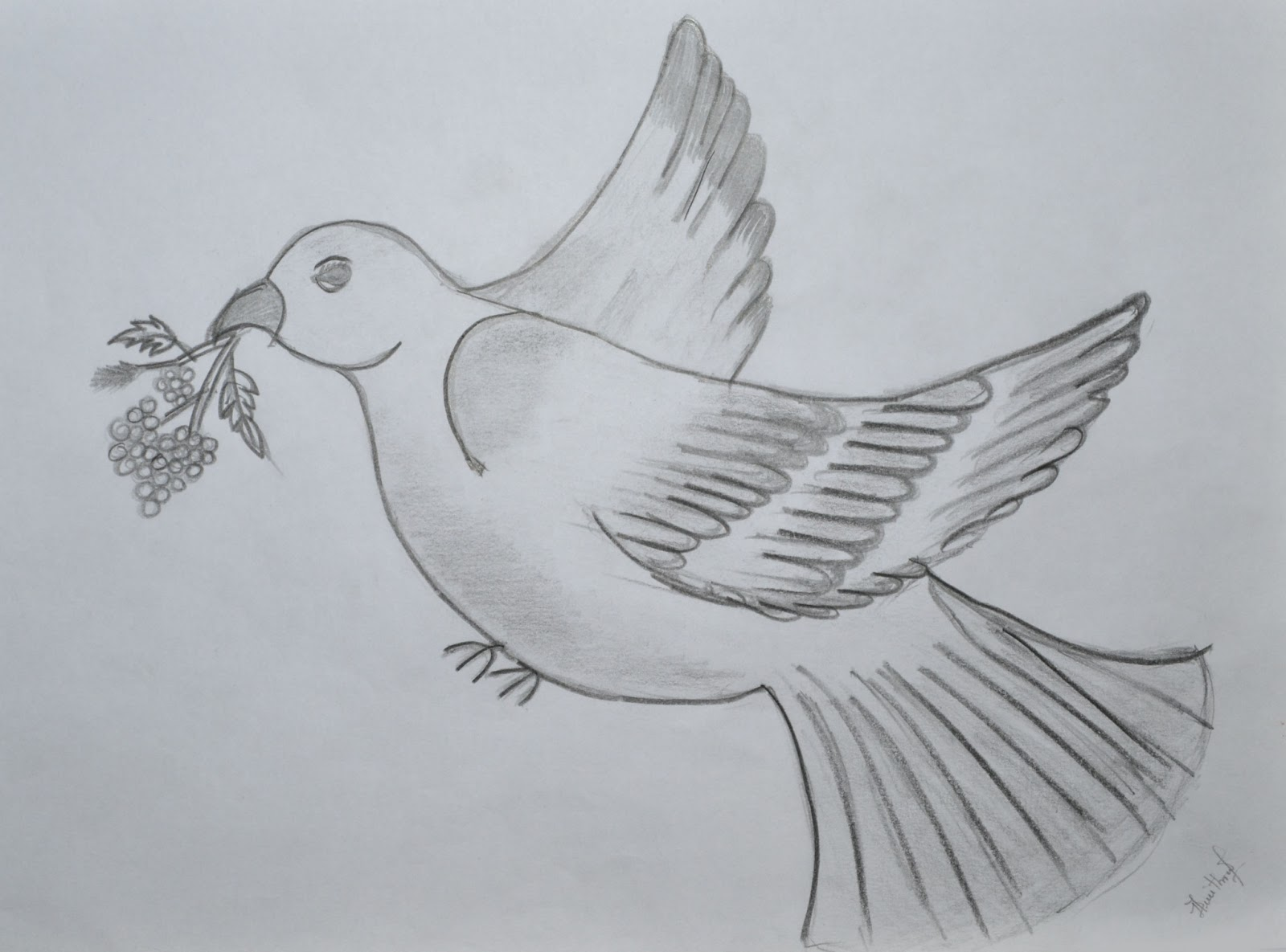 Simple Dove Drawings Pencil