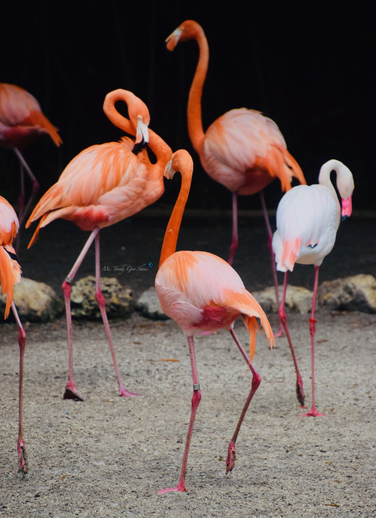 Flamingo Gardens in Florida has a lot more than just flamingos! | Ms. Toody Goo Shoes #flamingos