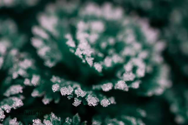 Winter, Lightroom, Photoshop, Fotografie, Eis, Blume, Eisblume