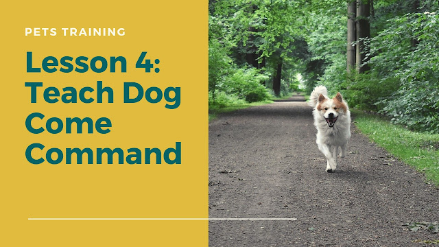 Teach Dog Come Command
