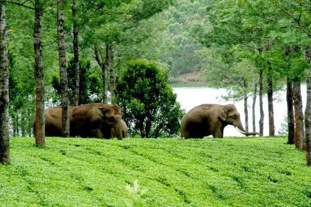 Elephant Arrival Spot Near Mattuppety