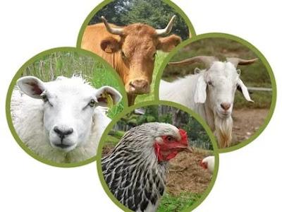 Hayvansal Üretim Bölümü