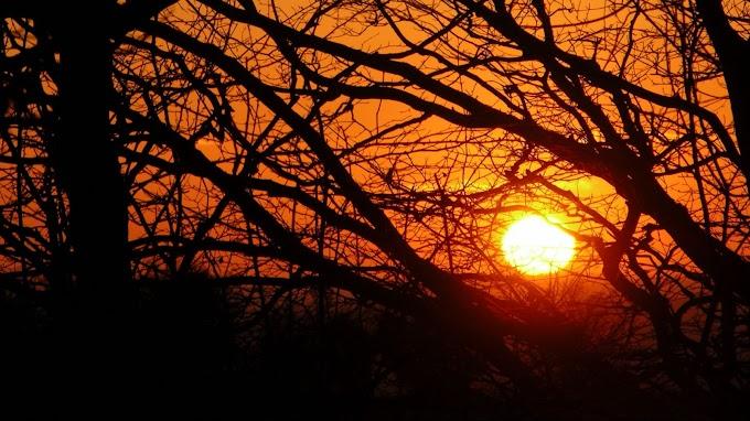 Papel de Parede Pôr do Sol, Galhos, Árvore