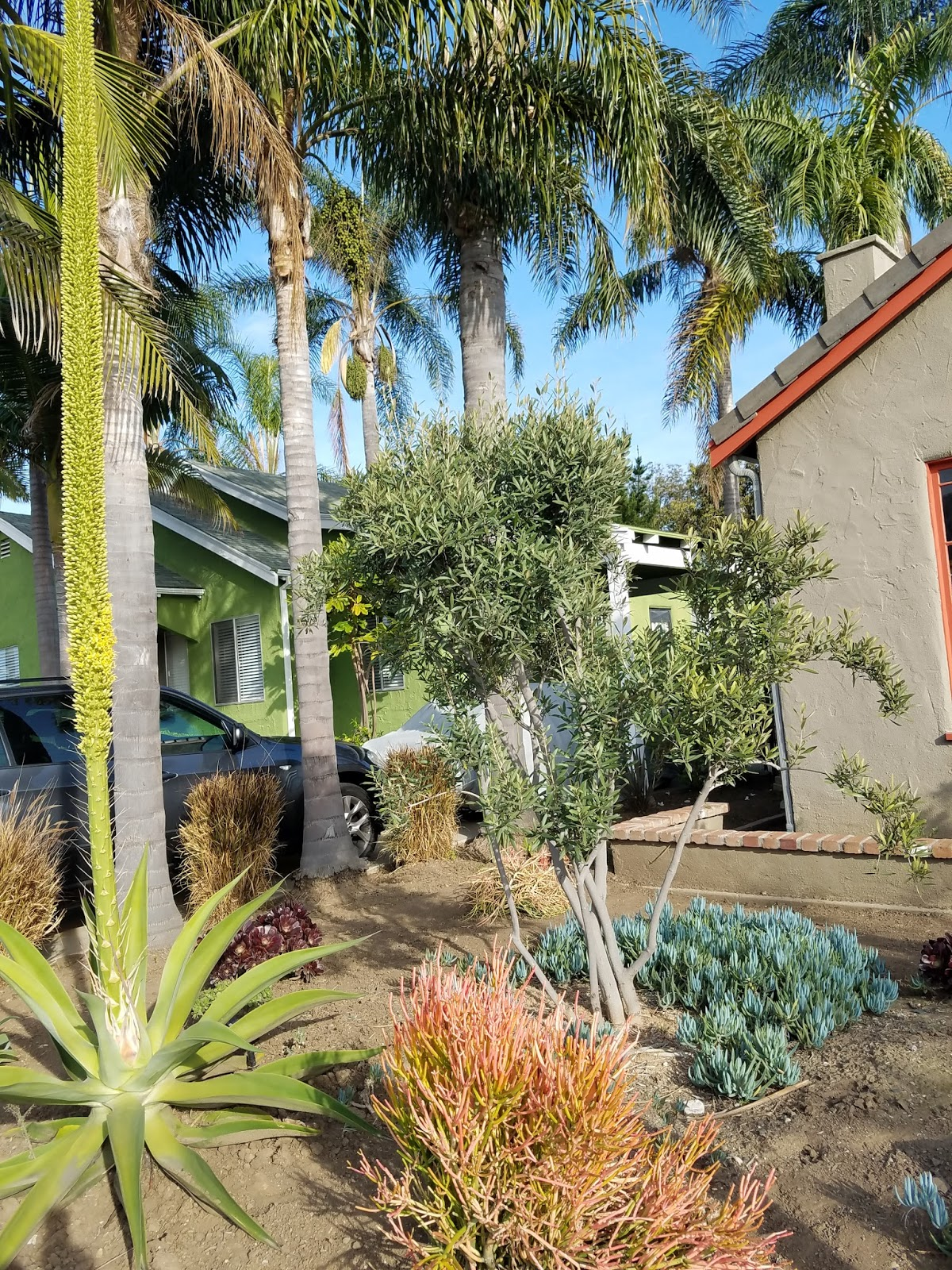 Several Years Ago We Decided To Get Rid Of Our Lawn And Put In Sustainable Plants Purchased Moreno Valley At Adam Hall S Nursery
