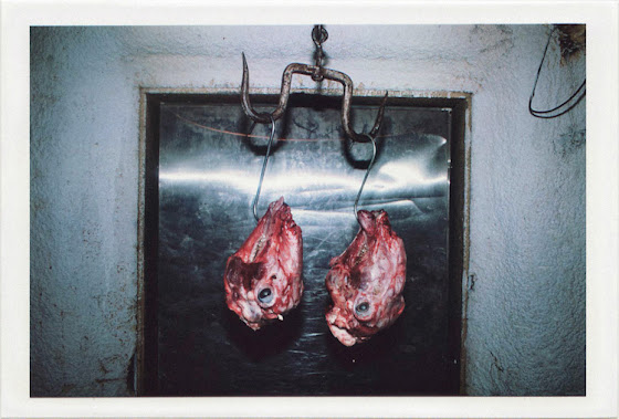 dirty photos - fumus - a photo of two slaughtered lamb heads