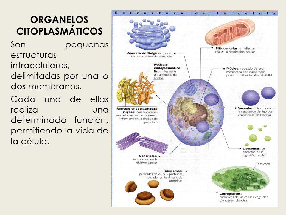Resultado de imagen de Protoplasmas y sustancias para la vida