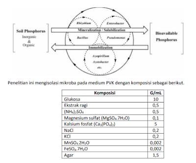 Data penelitian isolasi mikroorganisme pelarut fosfat