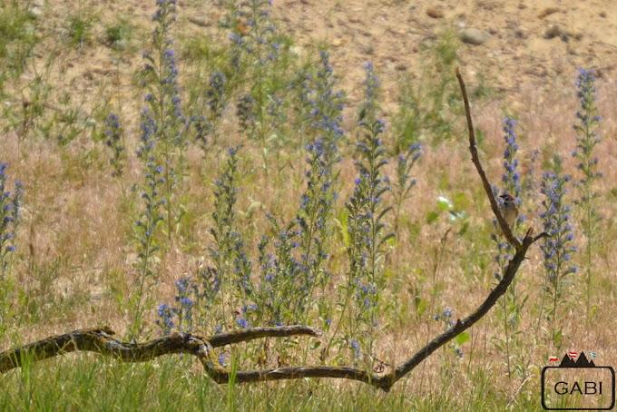 Pszczołojady i Jezioro Nezyderskie
