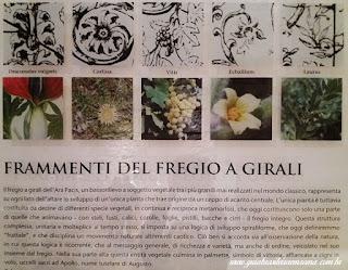 ara pacis identificacao flores frutos guia brasileira  - Ara Pacis em 3D