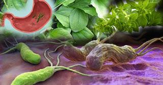 علاج جرثومة المعدة بالاعشاب جابر القحطاني