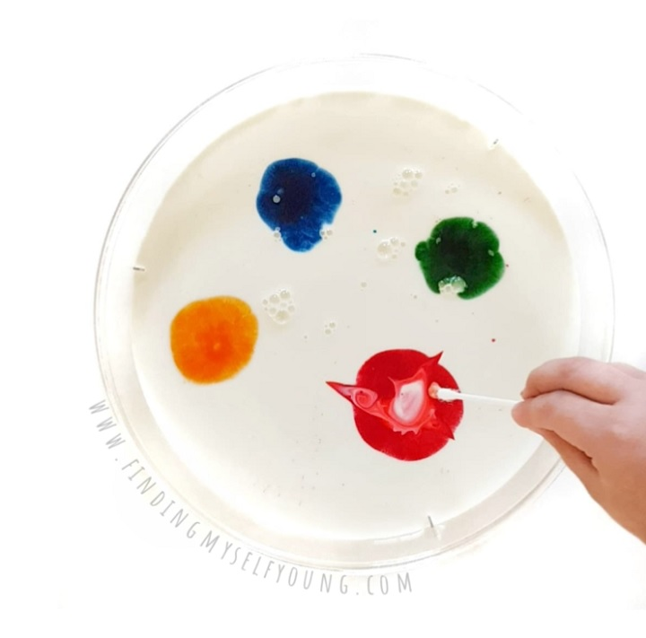 Dipping q-tip into food colouring during magic milk experiment.