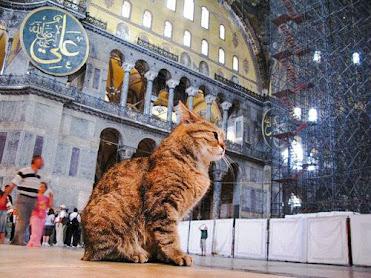 Abuherrira's cat