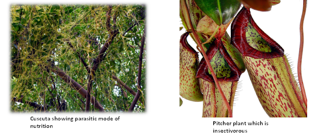 Parasitic and Insectivorous Plants, www.educationphile.com, ncert class 7th chapter 1, nutrion in plants