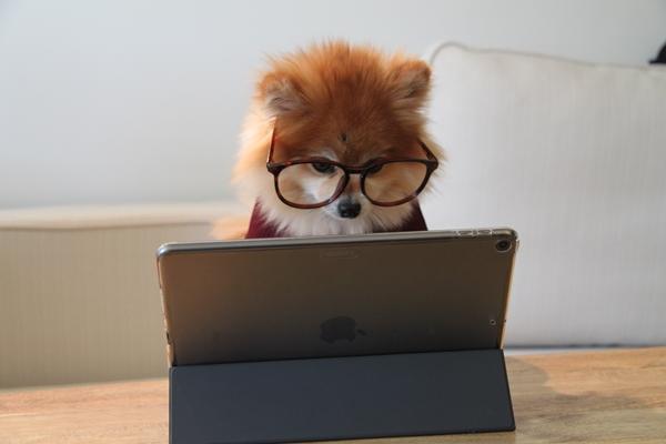 Cachorrinho de suéter e óculos em frente ao tablet
