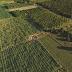 Em Ponto Novo, área empresarial do Projeto de Irrigação caminha para ser reativada