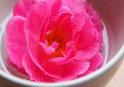 Rose Water- Simple Dark Circle Treatment