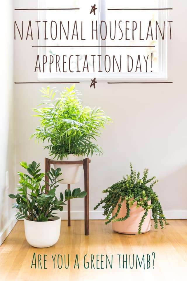 National Houseplant Appreciation Day Wishes Beautiful Image