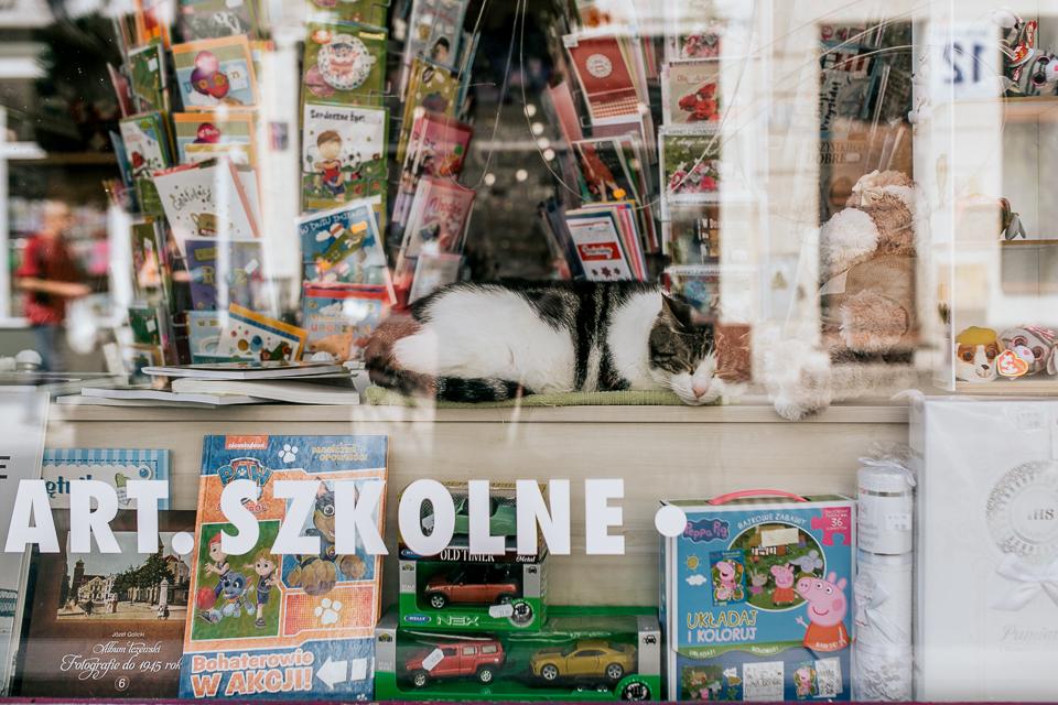 artykułu szkolne, kot, fotografia uliczna, polska, wwo