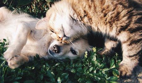 ¿Cuanto se preocupan los gatos por sus dueños?