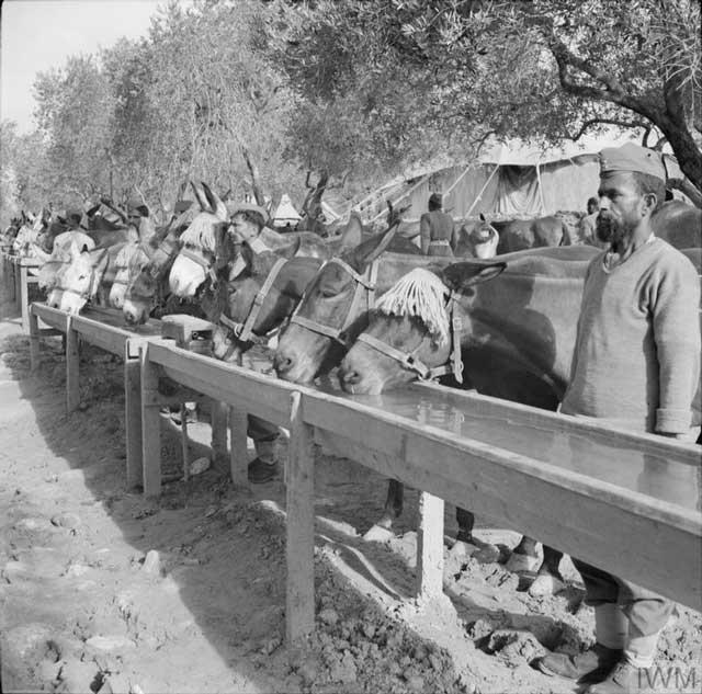 Indian mule train, 24 February 1942 worldwartwo.filminspector.com