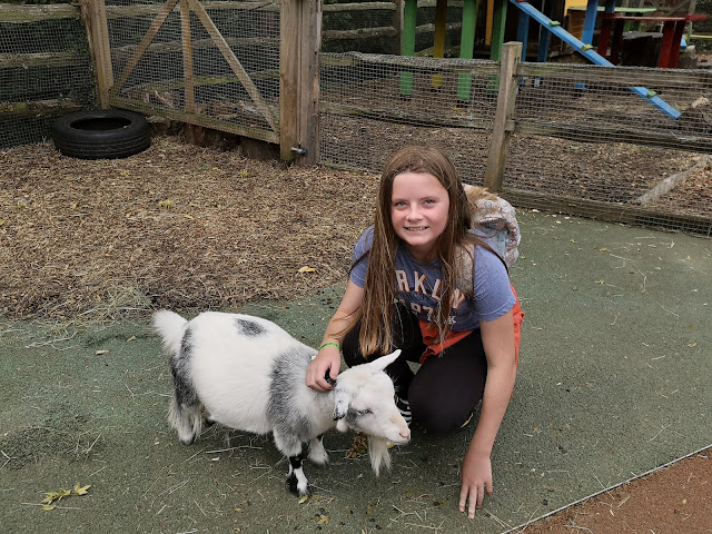 Tween girl petting a goat at London Zoo