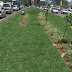 What happened to kidero grass? Now the county government wants the city beauty project revived.