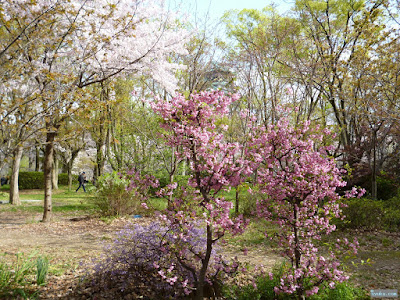 群青色と桃色の花
