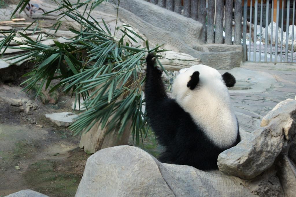 Tajska fauna - dzikie małpy, słonie, flamingi, krokodyle, tygrysy, pandy i misie koala, w tym jeden mój prywatny