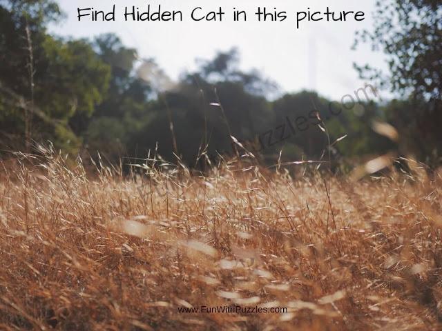 Picture puzzle of hidden cat