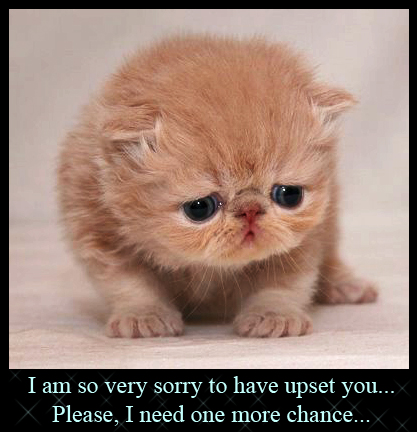 10 Thosand Cute Cat Wallpapers Cat Health Kitty Cat Grumpy Kitty Puppies Eye Kitty