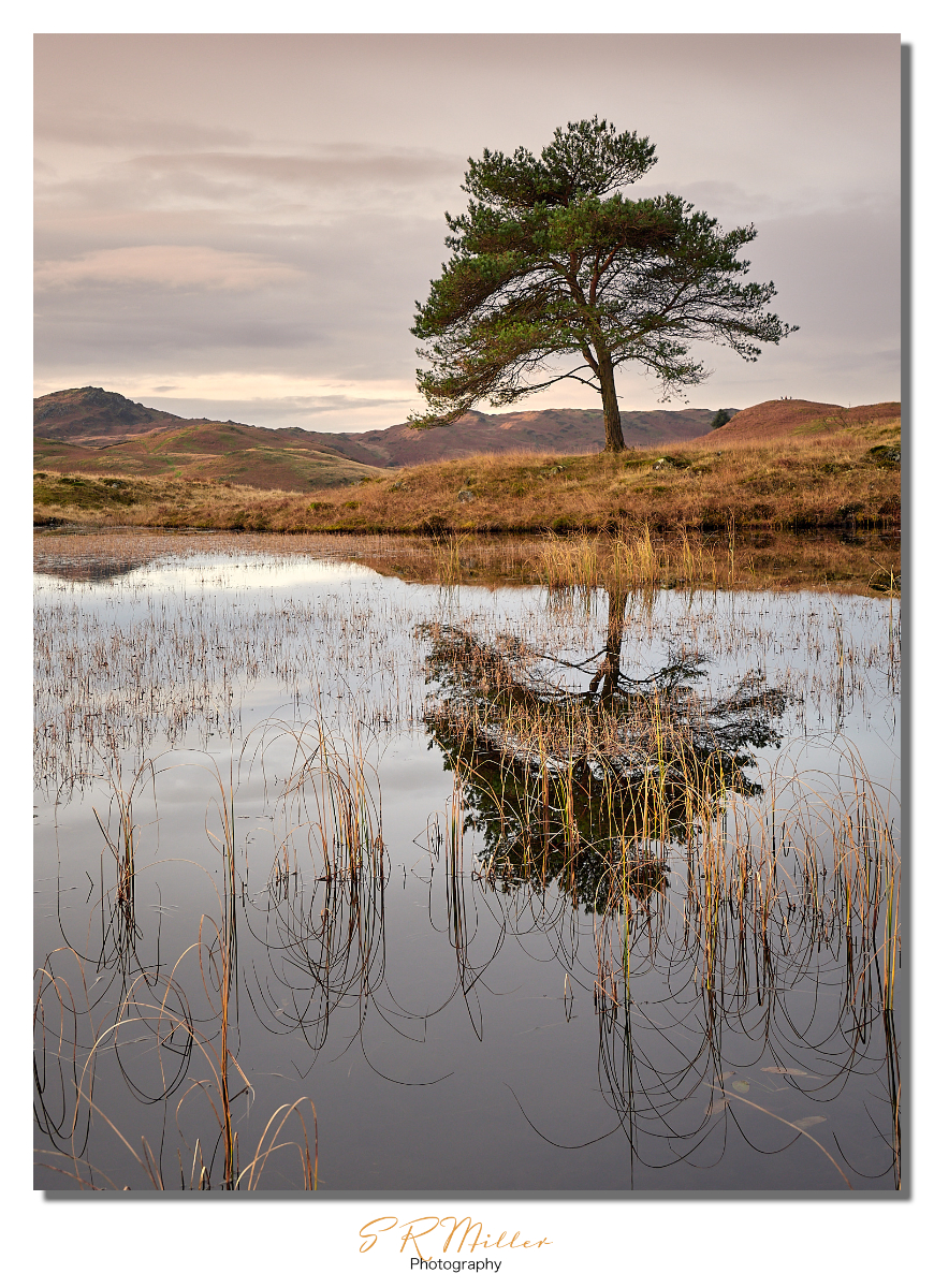 Kelly Hall Tarn morning reflection
