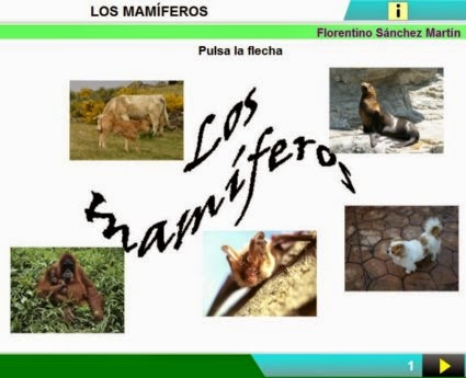 http://cplosangeles.juntaextremadura.net/web/edilim/curso_3/cmedio/animales_vertebrados_3/mamiferos/mamiferos.html