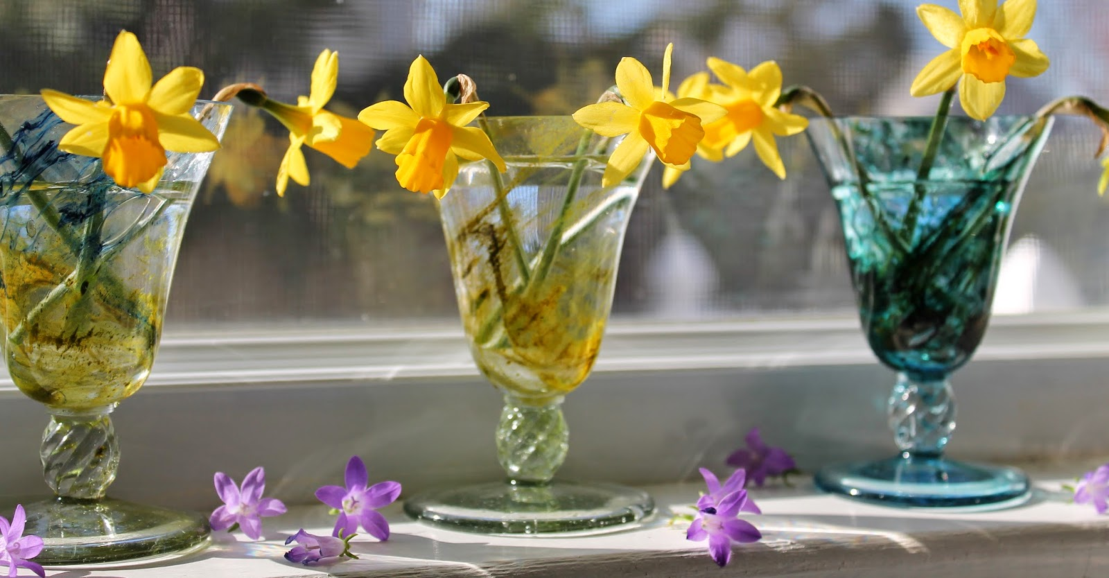 sweet-mini-daffodils-lovemysimplehome.com