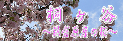 鎌倉桜〜桐ヶ谷〜