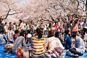 Festival Bunga Sakura di Jepang Dibatalkan Terkendala Merebaknya Virus Corona